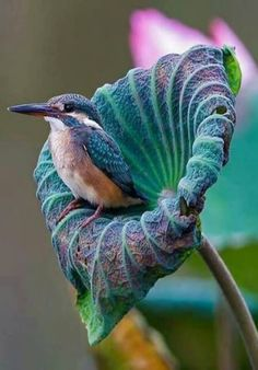 Blue hummingbird resting in a blue flower! Although this is not a hummingbird (it's a kingfisher) and it's not nesting, it is a gorgeous picture. Pretty Birds, Love Birds, Beautiful Birds, Animals Beautiful, Cute Animals, Simply Beautiful, Beautiful Gorgeous, Amazing Grace, Beautiful World
