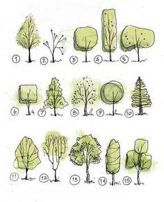 Trees @arch_grap • • • #sketch #archisketcher #arquitetapage #arquisemteta #arch_more #draw #tree #green #sketches #art_collective