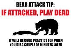 How to survive a bear attack