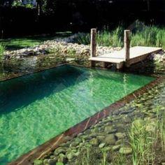backyard-natural-swimming-pool-3