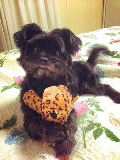 My dog Pretinha is the world cutest dog ever