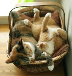 Mmm – clearly won't be using this basket in the garden today then!