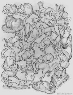 character design - cats sketches http://foxprints.com/tracy/character_design/cats.jpg