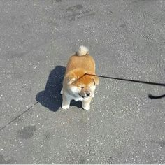 オッさんのTumblr. — absolutedoge: very puppy much nie