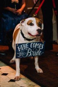 Pet Wedding Inspirat