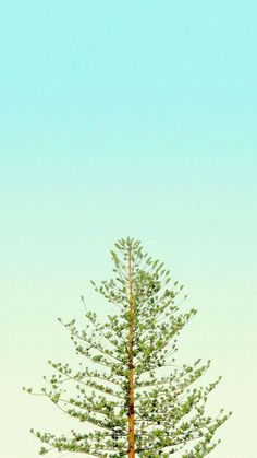 Vertical Wallpaper from pinnedby. Nature Wallpaper, Screen Wallpaper, Cool Wallpaper, Mobile Wallpaper, Phone Backgrounds, Wallpaper Backgrounds, Iphone Wallpaper, Minimalist Wallpaper, Simple Wallpapers