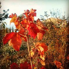 Colors de tardor a Cal Ros