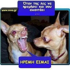 Funny Labs, Funny Greek, Stupid Funny Memes, Funny Photos, Minions, Haha, Jokes, Entertaining, Animals