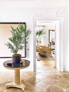 Indoor olive tree in
