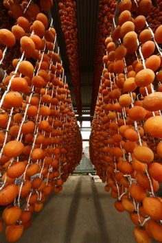 Japanese dried persimmons, Hoshi-gaki: photo by にたちん