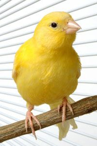 Frank Indiviglio explores easy methods of taming ad training finches and canaries on that avian blog from That Fish Place.