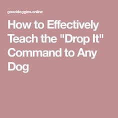 "How to Effectively Teach the ""Drop It"" Command to Any Dog"