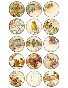 2 inch circles Digital Collage Sheet birds images by 300dpi