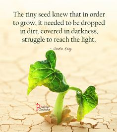 A Lesson From The Tiny Seed | Positive Outlooks Blog