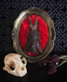 Victorian Mummified Hanging Bat Baroque Frame/Wall Plaque, Taxidermy, Bat Taxidermy, Victorian, Memento Mori, Oddity, Macabre, Gothic Decor, by beyondthedarkveil on Etsy https://www.etsy.com/ca/listing/525911592/victorian-mummified-hanging-bat-baroque