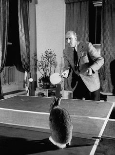 Horace loved to catch the ball in table tennis! LIFE With Horace the Housebroken Hare   LIFE.com
