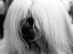 DOG'S . Número 2 ©gloriagiménez