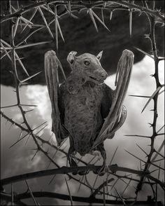 Nick Brandt · Calcified Bat II · 2012