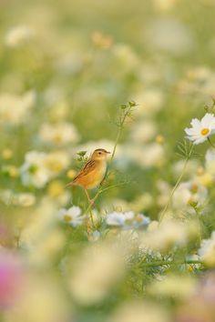 投稿からの写真 Beautiful Hijab, Beautiful Birds, Beautiful Gardens, Beautiful Pictures, Enchanted Wood, Four Seasons, Trees To Plant, The Great Outdoors, Pet Birds