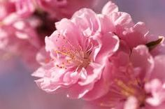 pink spring flowers - Google Search