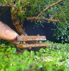Fabulous Miniature Gardens