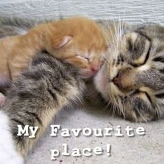 Awwww! How cute! This little kitten loves to snuggle up with her mama.