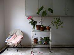 mieke verbijlen plants