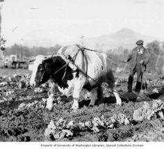 Randolph Scott– Buchanan Rides Alone Vintage Pictures, Old Pictures, Old Photos, Farm Pictures, Randolph Scott, Western Film, Work With Animals, Columbia Pictures, Vintage Farm