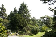 Conifers near the Ladies' Border