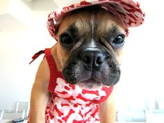 Introducing new summer apparel from Martha Stewart Pets available at PetSmart #marthastewartpets