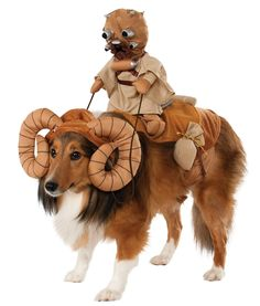 It's a Cool Star Wars Bantha Rider Pet Costume. Sensational ideas of Star Wars Pet Costumes for Halloween at PartyBell. Star Wars Halloween, Chien Halloween, Pet Halloween Costumes, Fete Halloween, Pet Costumes, Costume Ideas, Halloween Halloween, Costumes 2015, Trendy Halloween