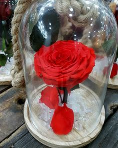 🥀 Beauty And The Beast Rose 🥀 Forever Roses 🥀 Forever Rose, Preserved Roses, Thessaloniki, Beauty And The Beast, Flower Art, Red Roses, Greece, Passion, Flowers