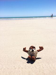 Taz at the beach (Aldinga Beach SilverSands, SA)