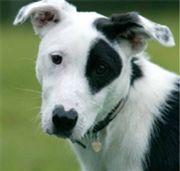 Blue Cross - House-training an adult dog