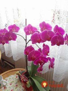Po dovolenke som našla zvädnutú orchideu bez života: Keby nie som zúfalá, tento nápad by som nikdy nevyskúšala, ale zabralo to okamžite! House Plants, Flowers, Phalaenopsis, Planters, Garden Design, Garden, Orchids, Succulents, Herbs