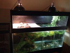 Diy turtle tank topper