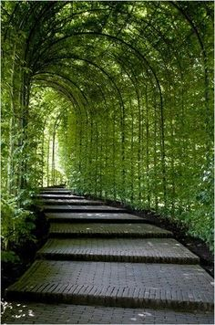 COUNTRY HOME. Fairy tale walkway. Could you imagine this with lots of little lights hanging from the ceiling at night?