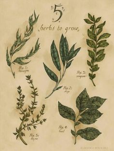 A lovely illustration of some of the easiest things to grow. And the best part, you don't have to wait until spring. Even in colder climates, a sunny window and adequate watering will give you herbs. Vintage Botanical Prints, Botanical Drawings, Botanical Illustration, Botanical Art, Illustration Art, Illustrations, Herb Garden Design, Modern Garden Design, Herbs Garden