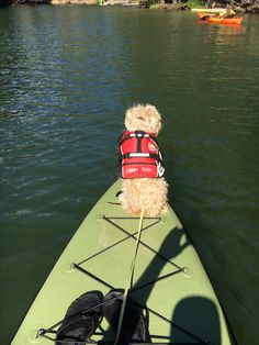 SUP with dog at Donner Lake