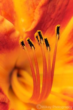 Orange flower-Macro photography