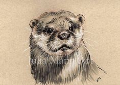 Ink Pen Drawings, Animal Drawings, Beginner Drawing Lessons, Different Forms Of Art, Wildlife Art, Otters, Nursery Art, Fine Art Prints, Sketches