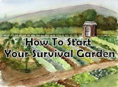 How To Quickly Start  Maintain a Survival Garden after a…