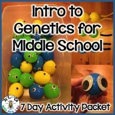 This is my favorite way to teach genetics. Using this hands-on activity, your students will learn all about phenotypes, genotypes, alleles, genes, chromosomes, dominant, recessive, incomplete dominance, and more. This activity could be used to introduce Punnett Squares too!To see a free elementary school version that is similar to this activity, go here Please note that this middle school version does not go into evolution.