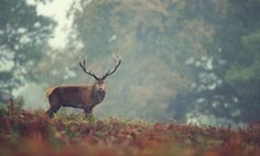 Photo rain by Mark Bridger on 500px