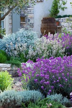 dusty miller, white and blue penstemon, stone wall, blue shutters, and rain barrel ... perfect!