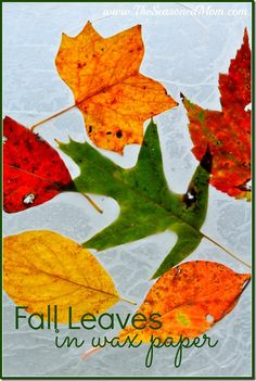 Fall Leaves in Wax Paper -- a fun autumn activity for preschoolers! www.TheSeasonedMom.com