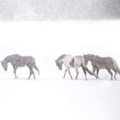 #horses #winter #snow