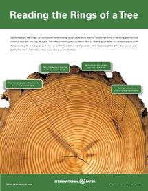 Tree rings for kids tree rings worksheets and ring best woodworking resource ccuart Images