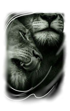 Tattoo Lion, tattoo tiger