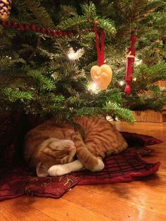 Gift giving season is here! For cat lovers looking for ideas on what to get for their beloved kitty, here's a list of holiday gifts for your cats! Christmas Scenes, Noel Christmas, Christmas Animals, Christmas Cats, Christmas Humor, Christmas Images, Christmas Morning, Cute Cats And Kittens, I Love Cats